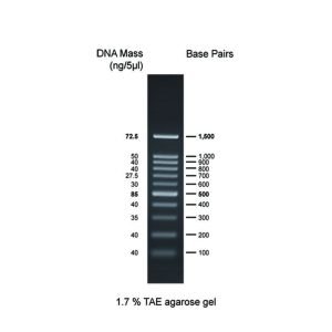 100bp DNA Ladder